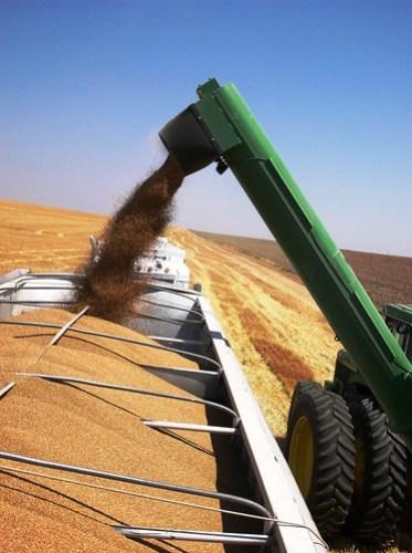 Grain cart unloading on the truck