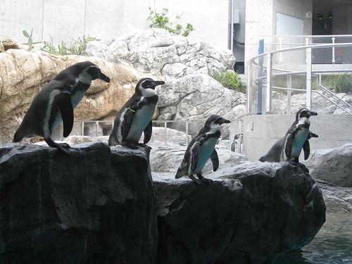 ペンギン、飛びそう