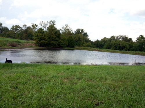 28/365 - Farm Pond