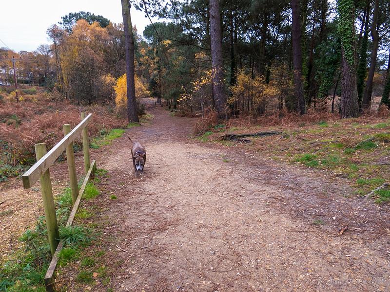 Jez head up the hill on Upton Heath