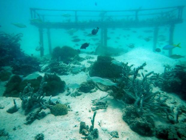 Borneo Divers