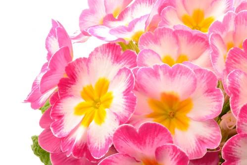 Flowers by Nicki Ki