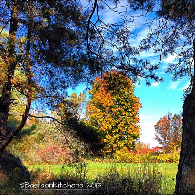 Oct 5 - afternoon {enjoying some unexpected afternoon sunshine} LOVING the great fall colors. #fmsphotoaday #fall #trees #autumn #color #colorful
