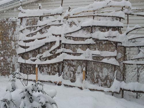 Fence Trellis in Winter