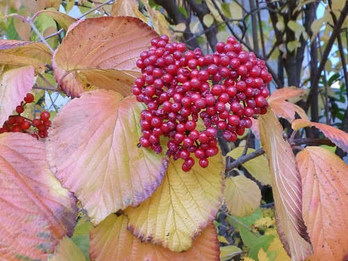 Autumn berries and leaves