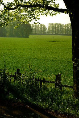 20130519-05_Cawston - Looking to Lime Tree Avenue by gary.hadden