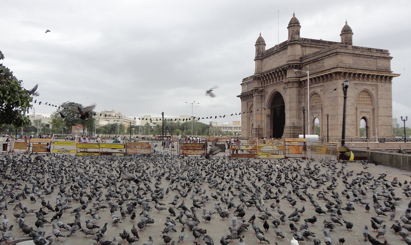 Pigeons in front of Gateway of India