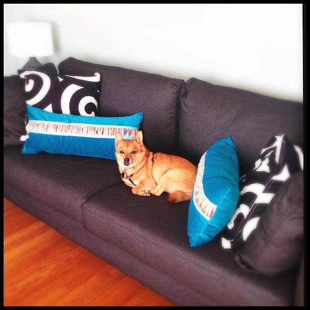 Rudy loves his new sofa!