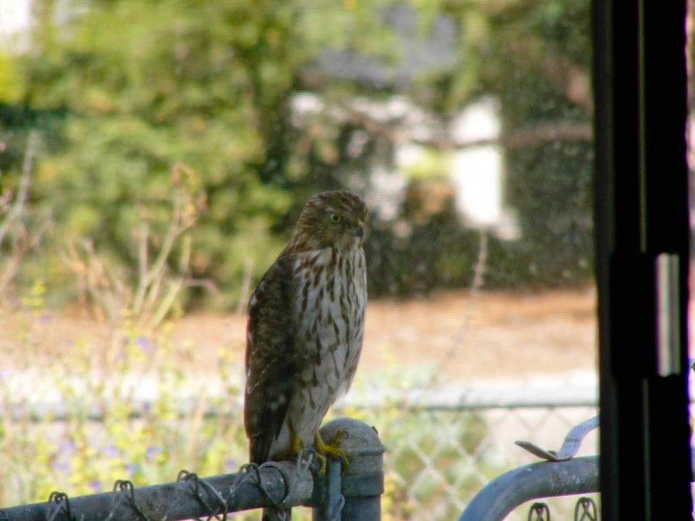 Wildlife in the Garden (5/6)