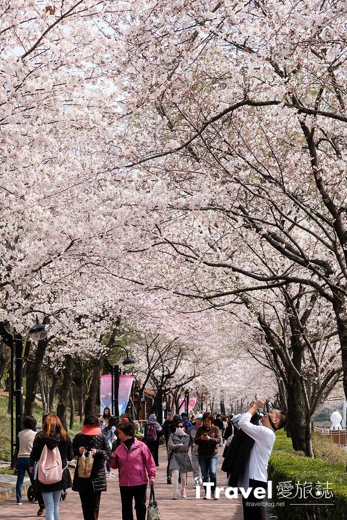 首尔赏樱景点 乐天塔石村湖 (13)