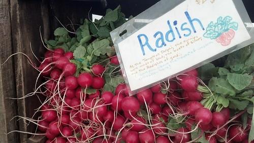 Curly-cue radish roots