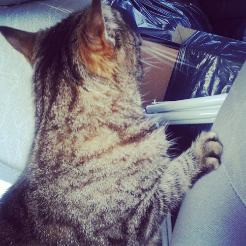 My very anxious travel companion
