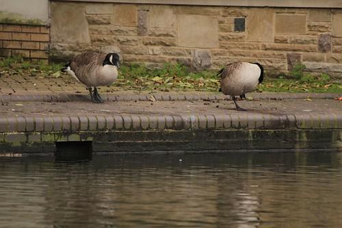 Londra: abitanti del regent's canal a King's cross