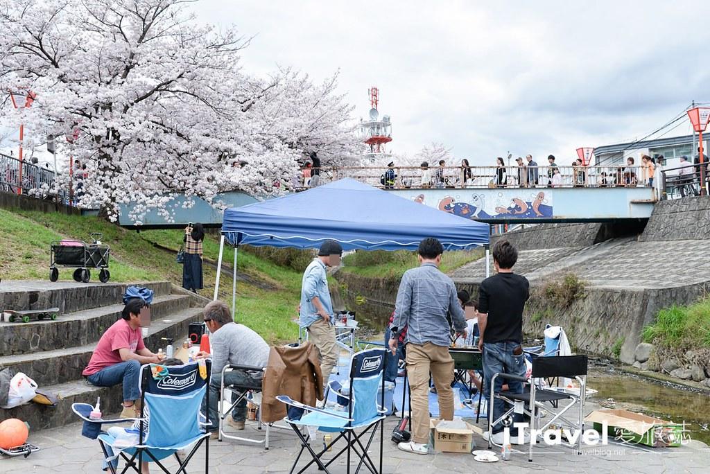 《奈良赏樱景点》高田川千本樱:大和高田市水岸樱花隧道间,享受野餐赏樱与好友相聚乐趣。