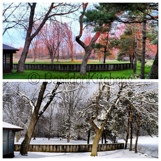 "May 22 - change {the view from my back porch demonstrating the ""change"" in seasons; top - spring; bottom - winter} #fmsphotoaday #change #seasons #princeedwardcounty"