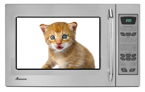 Kitten In A Microwave
