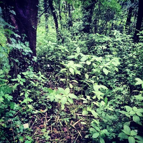 Site 7, plot 3