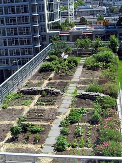 Rooftop Garden - Planting in June