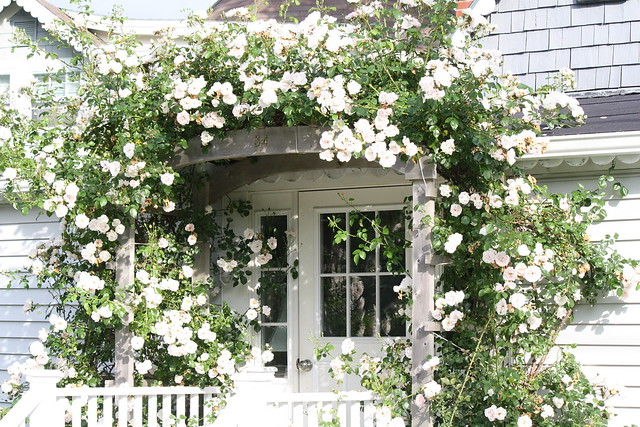 climbing roses on cottage