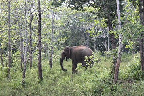 20130115_7160_first-elephant_Vga