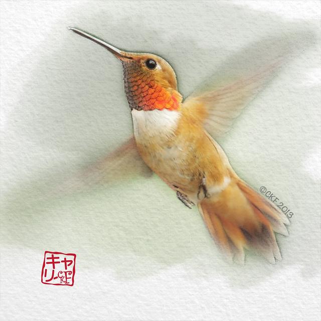 Hummingbird Profiles #3