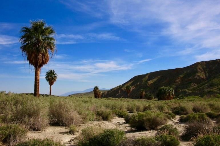 Thousand Palms Oasis, Coachella Valley, CA