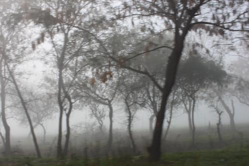IMG_9956-fog