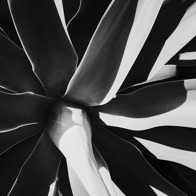 Succulent 2 (JPEG)