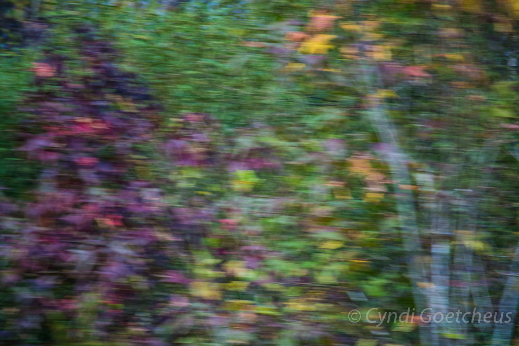 blurred leaves