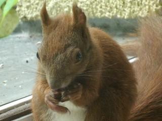 Eichhörnchen zähmen 5