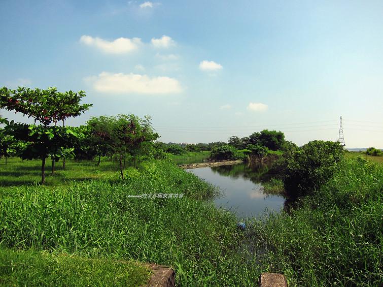 大樹舊鐵橋生態公園 (4)