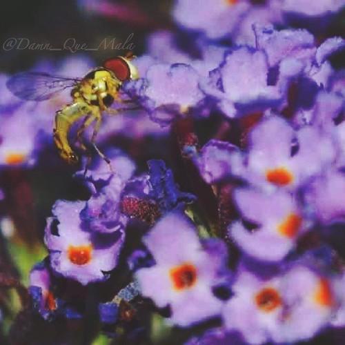 Baby Bee by damn_que_mala