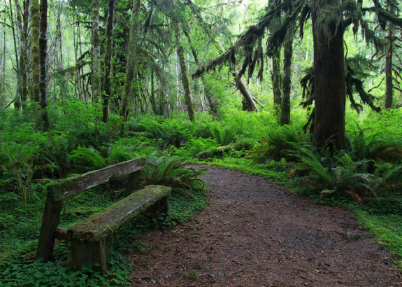 Quinault Rainforest Nature Trail