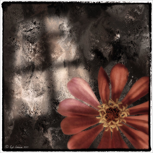 Image of a large zinnea bloom on a texture with Gobo window light