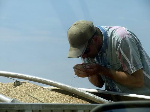Z Crew: studying the grain