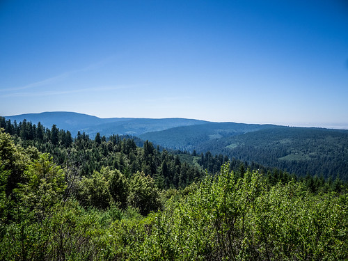 Redwoods and Elk-094