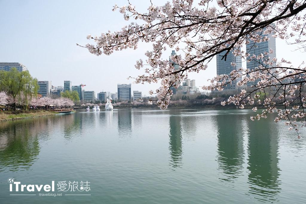 首尔赏樱景点 乐天塔石村湖 (6)