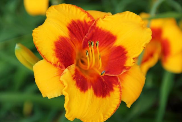 20140704_Flowers_013