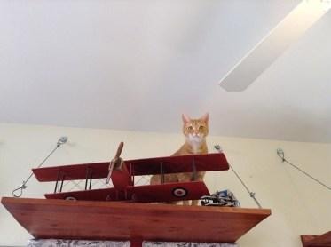 The Ninavore considers aerial attacks