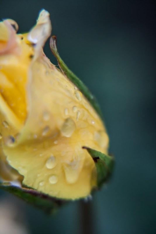 raindrops  4/7