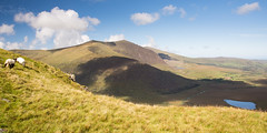 Sheep above Conor Pass