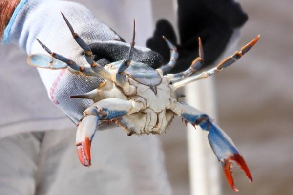 Gulf Coast - Shrimping-0273