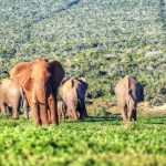 Our Big 5 Safari at Addo Elephant Park