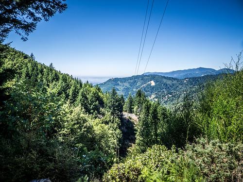 Coastal Redwoods and Fog-062