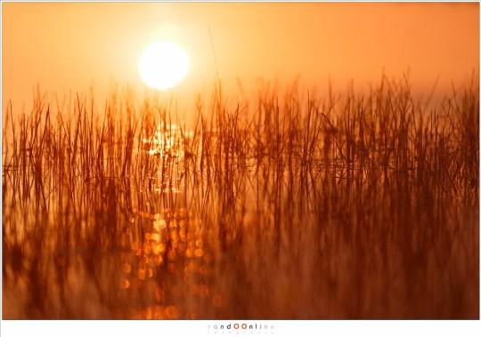 De reflectie van de zon en het gras in het water, of is het de zon zelf?