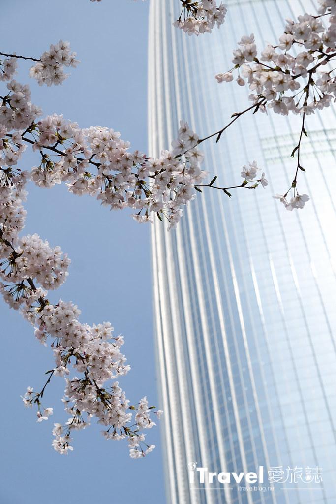 首尔赏樱景点 乐天塔石村湖 (21)