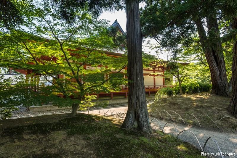 Motsu-ji de Hiraizumi-11