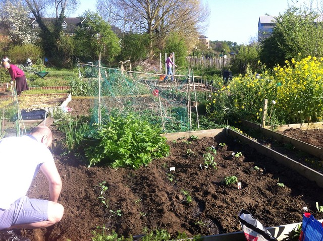 london allotment 3