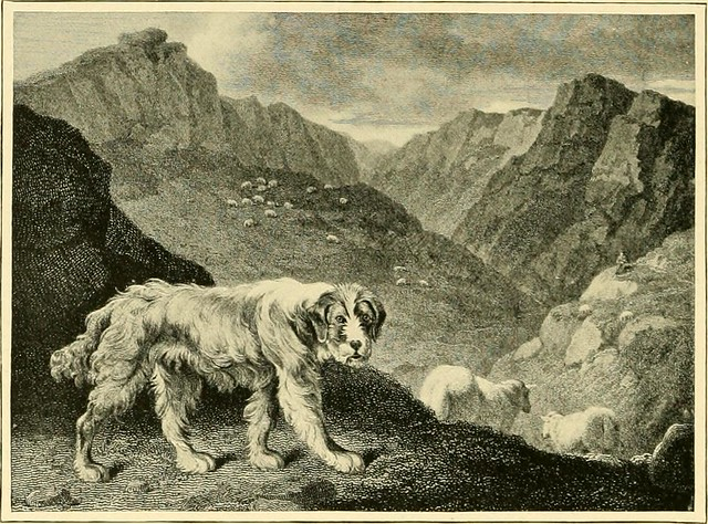 "Image from page 145 of ""The new book of the dog : a comprehensive natural history of British dogs and their foreign relatives, with chapters on law, breeding, kennel management, and veterinary treatment"" (1911)"
