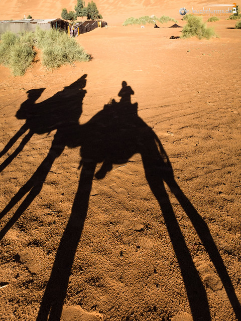 Galanty show with camels